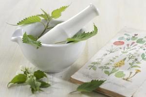 Herboristerie - Ortie, plante médicinale